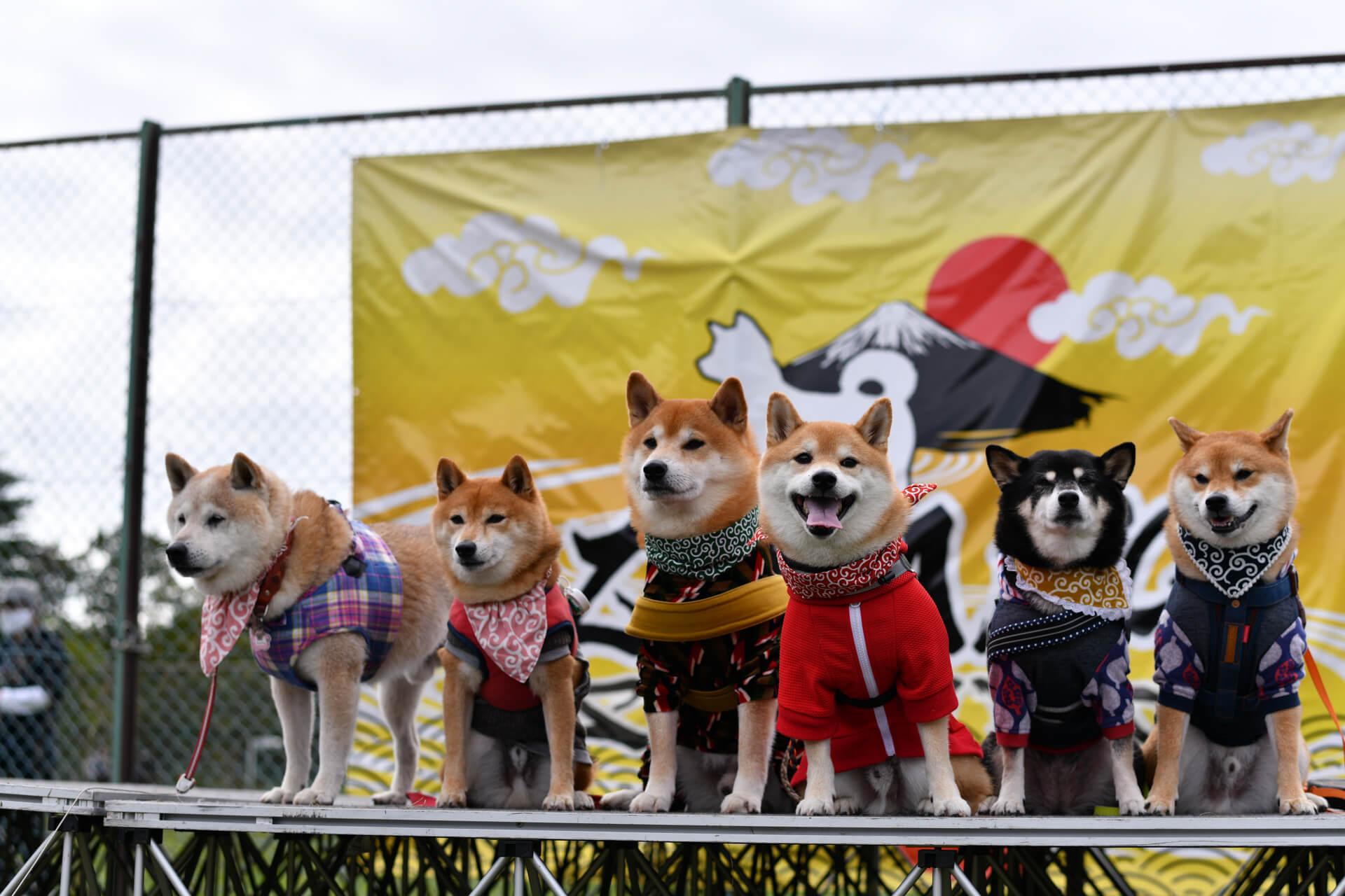 ゆかいな日本犬たち