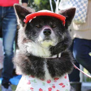 日本犬祭2018 1