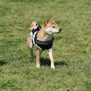 日本犬祭2018 12