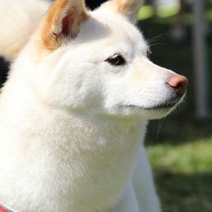 日本犬祭2018 13