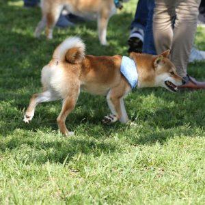 日本犬祭2018 14