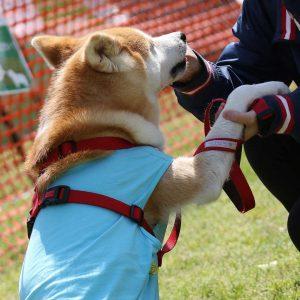日本犬祭2018 17