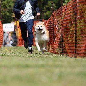 日本犬祭2018 19