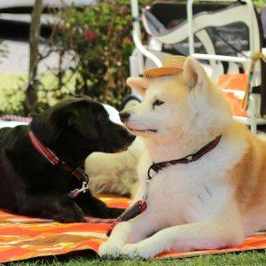 日本犬祭2018 26