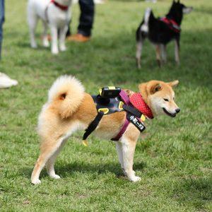 日本犬祭2018 28