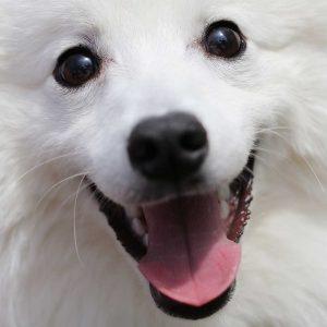 日本犬祭2018 29