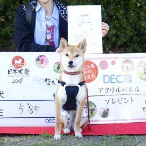 日本犬祭2018 62