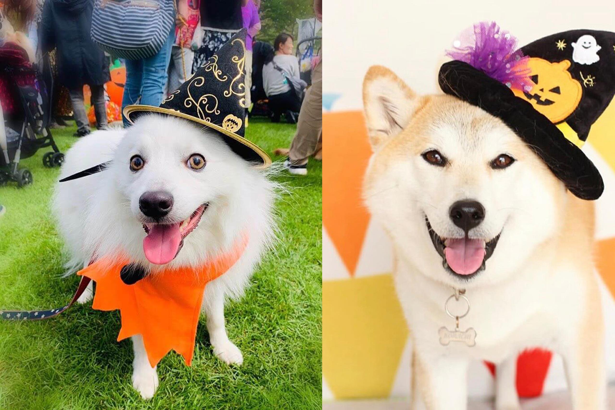 ハロウィン仮装大会愛犬とコスプレしステージ披露